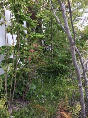 雑木林のお庭