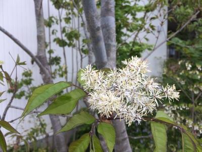 雑木林のお庭 今はお花が咲いています