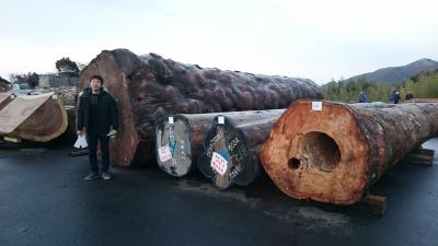 各務原の木材の競市 原木の様子