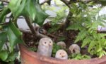 陶器のフクロウの置物