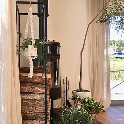 お部屋の印象を変える、目線の観葉植物