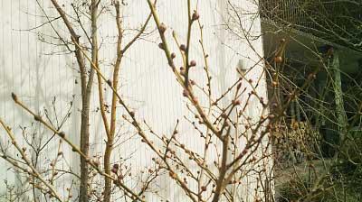 春の木々(住工房 ショールーム)