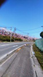 桜並木が美しいウォーキングコース