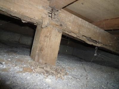 耐震診断にて、床下のシロアリ