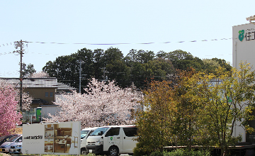 住工房の桜