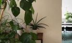 癒やしの植物