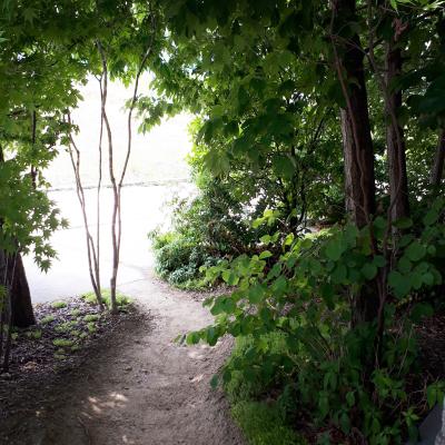 森の中のような庭