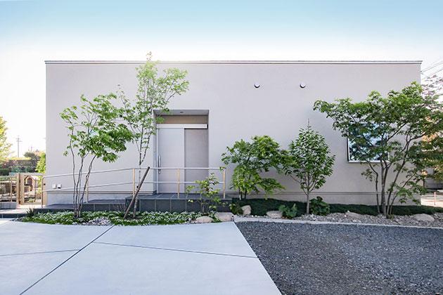 外壁は左官仕上げの塗り壁。柔らかい株立ちの庭木と馴染みます。