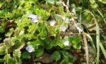 春の訪れ(野花)