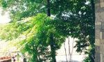 住工房の玄関からの景色