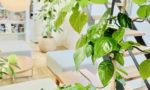 インテリアにも観葉植物にもこだわった素敵な会社